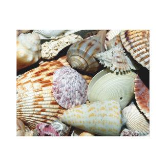 海の貝 キャンバスプリント