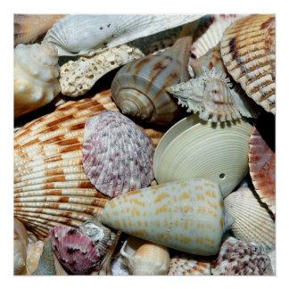 海の貝 ポスター