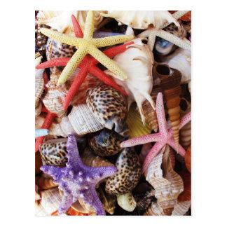 海の貝ansのヒトデの写真の上で閉めて下さい ポストカード