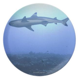 海の鮫、低い角度眺め プレート
