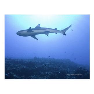 海の鮫、低い角度眺め ポストカード