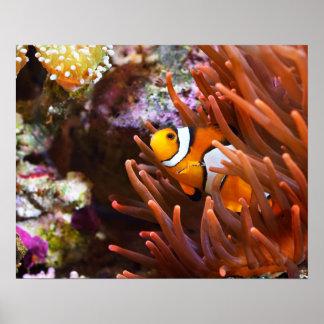 海のClownfishの水中野性生物 ポスター