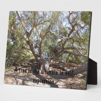 海岸のサンタ・バーバラの近くの不規則に広がる木 フォトプラーク