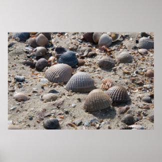 海岸の意見-貝 ポスター