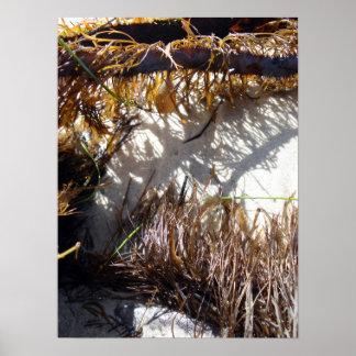 海岸の海洋生物 ポスター