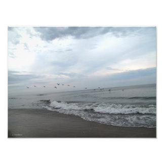 海岸上の鳥 フォトプリント