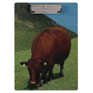 海岸線でさまよっているデボン南ルビー色の赤い牛 クリップボード
