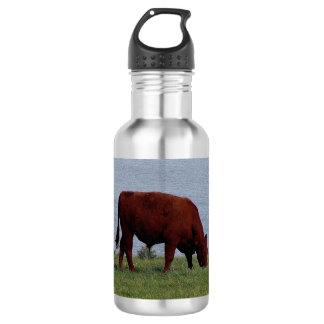海岸線のデボン南ルビー色の赤い牛Grazeing ウォーターボトル