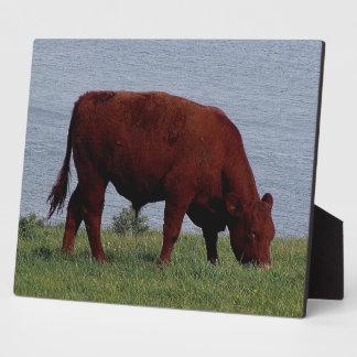 海岸線のデボン南ルビー色の赤い牛Grazeing フォトプラーク