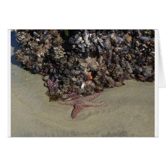 海星および他の海洋生物 カード