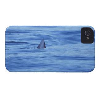 海水の鮫の水泳 Case-Mate iPhone 4 ケース