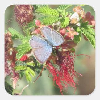海洋の青い蝶 スクエアシール