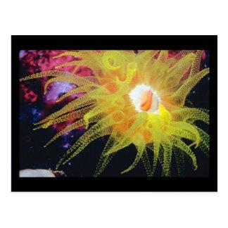 海洋生物の郵便はがきの美しい驚異 ポストカード