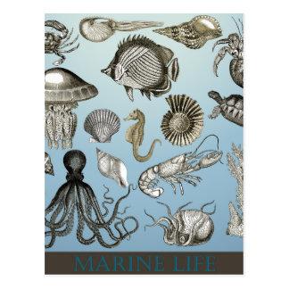 海洋生物を救って下さい! ポストカード