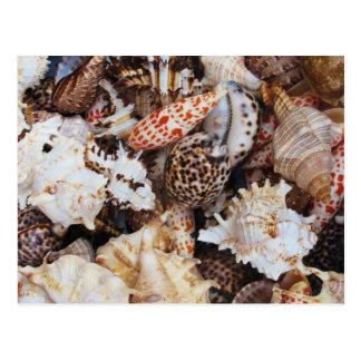 海海岸の恋人のための混合された貝殻 ポストカード
