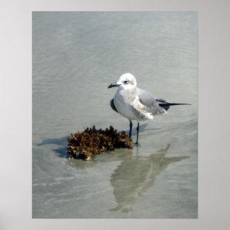 海藻が付いているビーチのカモメ ポスター