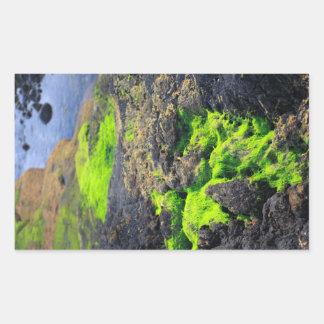 海藻 長方形シール