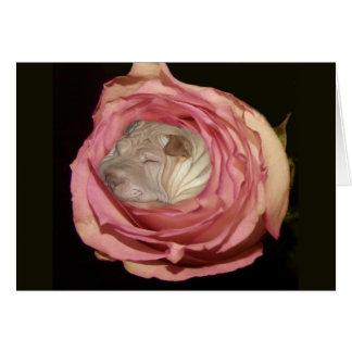 淡いピンクのバラで眠ります、中国人のShar Pei犬 カード
