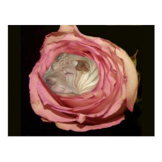 淡いピンクのバラで眠ります、中国人のShar Pei犬 ポストカード