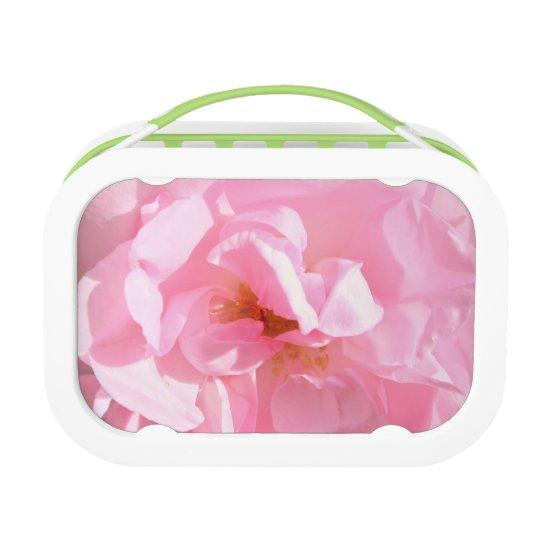 淡いピンクのバラの花びら ランチボックス
