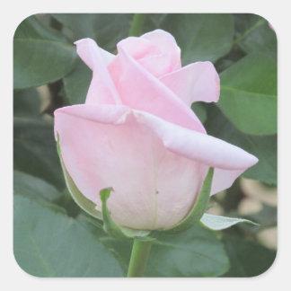 淡いピンクのバラ スクエアシール