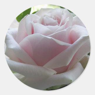 淡いピンクのバラ ラウンドシール