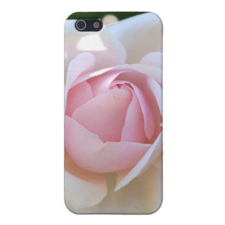 淡いピンクのバラ iPhone 5 CASE