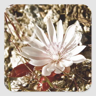 淡いピンクの砂漠の花 スクエアシール