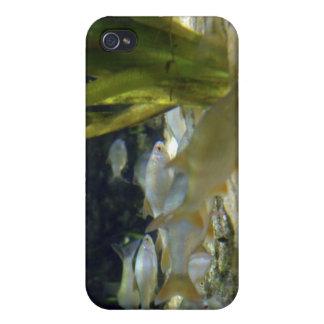 淡水のしみのiPhoneの場合 iPhone 4 カバー