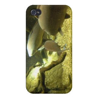 淡水のとまり木の魚のiPhoneの場合 iPhone 4 ケース