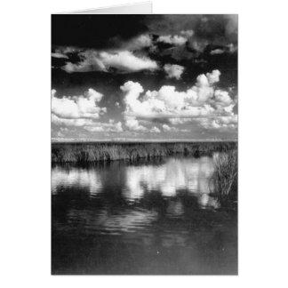 淡水の沼地ヴィスタのフロリダの沼沢地 カード