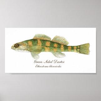 淡水の緑味方されたヘビウ科 ポスター