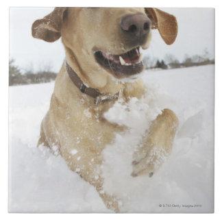 深い雪を通って跳んでいるラブラドル・レトリーバー犬 タイル