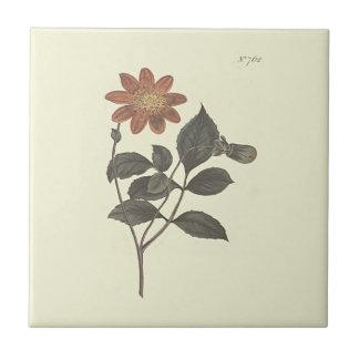 深紅によってはダリアの植物の絵が開花しました タイル