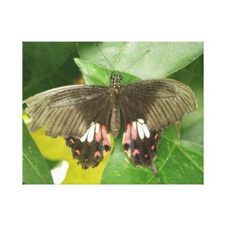 深紅のアゲハチョウの蝶キャンバスのプリント キャンバスプリント