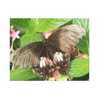 深紅のアゲハチョウの蝶マクロキャンバスのプリント キャンバスプリント