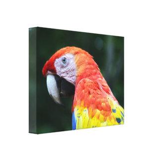 深紅のコンゴウインコのキャンバス キャンバスプリント