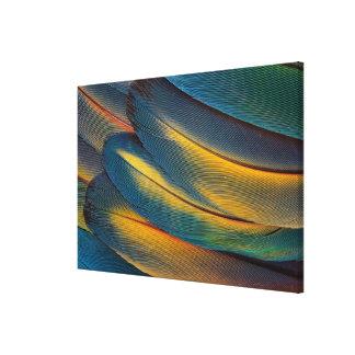 深紅のコンゴウインコの羽の終わり キャンバスプリント