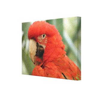 深紅のコンゴウインコ キャンバスプリント