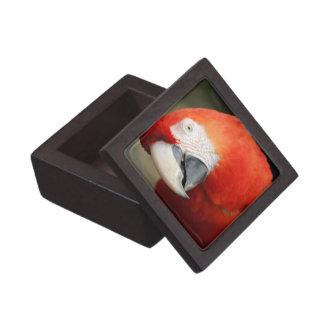 深紅のコンゴウインコ ギフトボックス