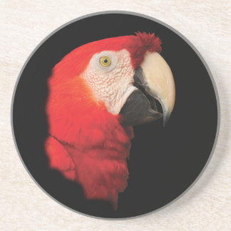 深紅のコンゴウインコ コースター