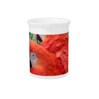 深紅のコンゴウインコ ピッチャー