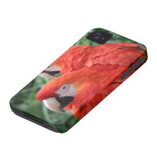 深紅のコンゴウインコ Case-Mate iPhone 4 ケース