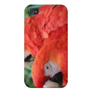 深紅のコンゴウインコ iPhone 4 カバー