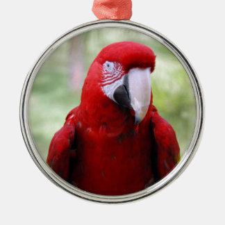 深紅の赤のコンゴウインコ メタルオーナメント