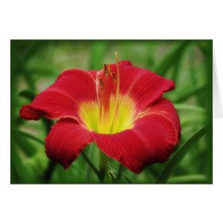 深紅の開花-ワスレグサ グリーティングカード