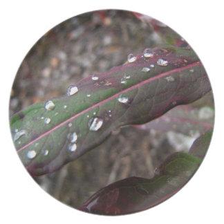 深緑色および赤の葉 プレート