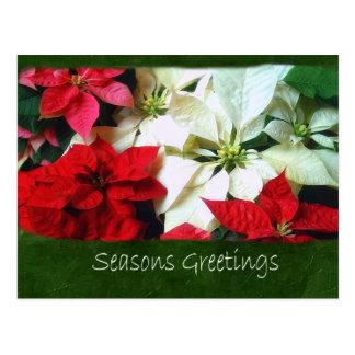混合された色のポインセチア1 -季節のごあいさつ ポストカード