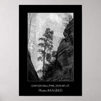 渓谷壁のマツ、ZION NP、UT. ポスター