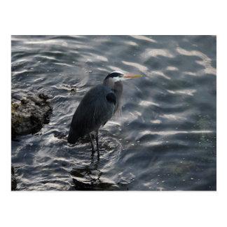 渦巻く水の素晴らしい青鷲 ポストカード